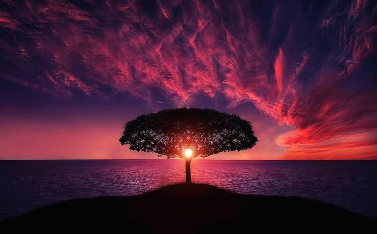 arbres au coucher de soleil